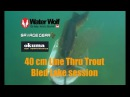 40 cm line thru trout amazing underwater strikes by Water wolf camera at Bled lake