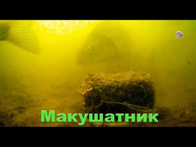 Макушатник Съемка под водой на озере underwater Рыбалка Fishing angeln câu cá ประมง