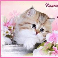 красивые фото открытки