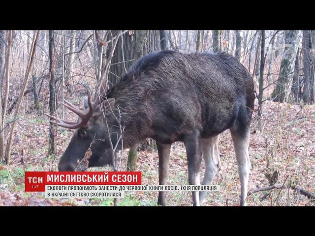 Екологи пропонують занести лосів до Червоної книги України