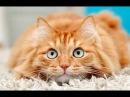 Смешно до слез про кошек Смешные приколы 2018 2 Кошки Без монтажа