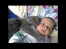 Приколы с кошками и котами Прикольное видео для ДЕТЕЙ