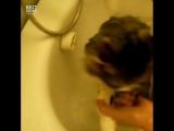 Кот ругается во время купания