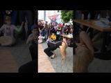 Даша Ролик Танцы