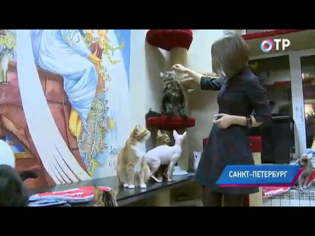Малые города России Город кошек в подземелье Эрмитажа