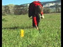 Прокладка следа для щенка Первый этап