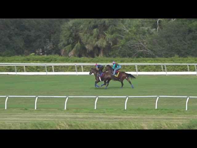 Untamed Domain outside and Causeur work 5 8 in 1 02 2 on 1 27 18