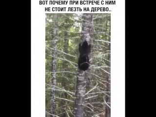кто считает медведя неуклюжим животным?