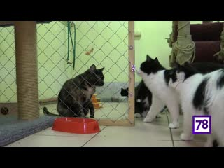 """Рубрика """"Пора домой"""". Котики из Ржевки ищут дом. Программа """"Телекурьер"""""""