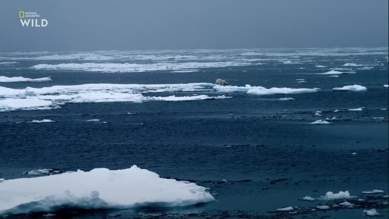 Дикая Арктика Острова льда и огня