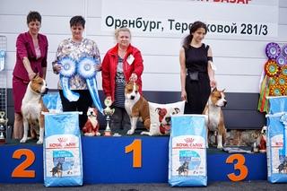 Клуб собаководства ювентус в оренбурге