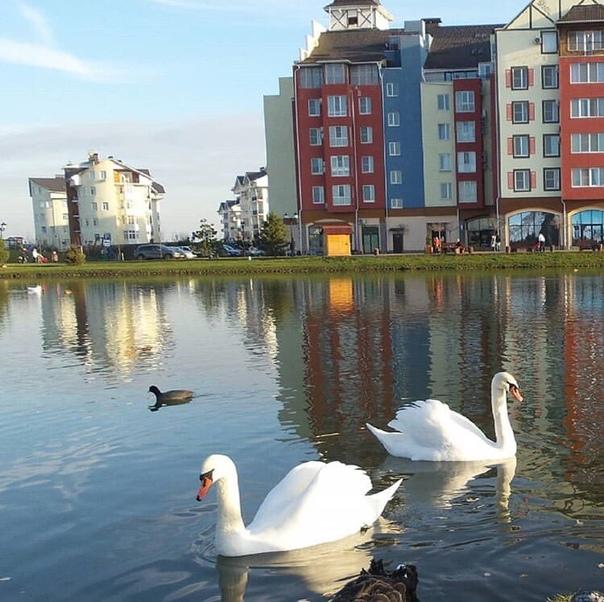 русском языке краснодар немецкая деревня лебеди фото ильюхина признается, что