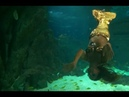 РУСАЛКИ СУЩЕСТВУЮТ Реальные кадры из океанариума!
