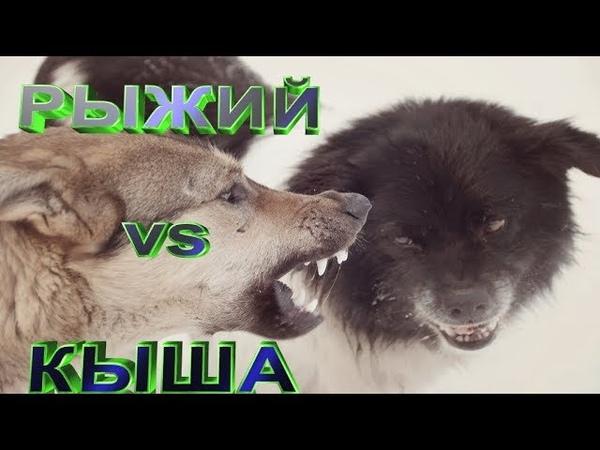 РЫЖИЙ vs КЫША / RED vs KISHA