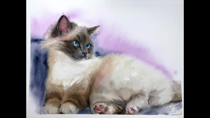 Сиамская кошка акварелью