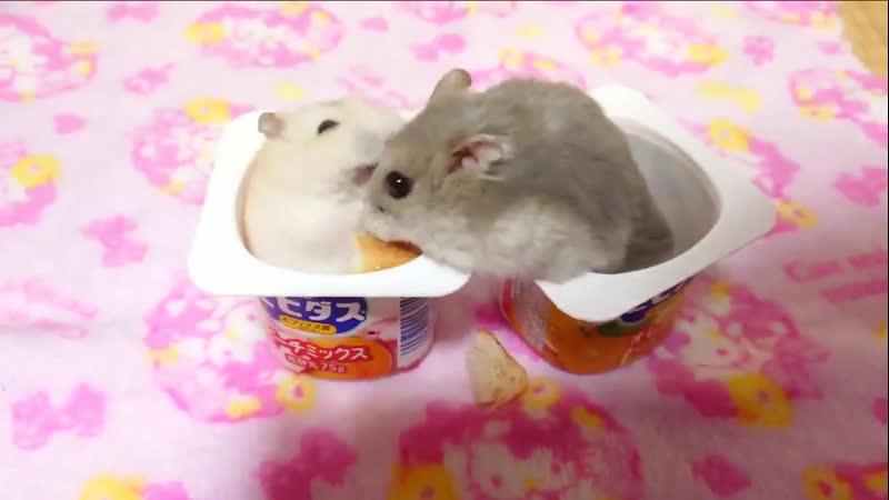 Woozi and hoshi