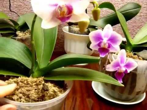 ✅ Перестал расти цветонос у орхидеи. Выход найден!