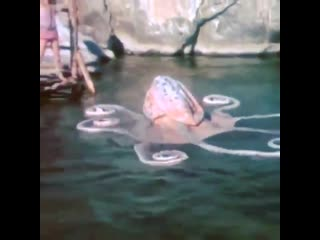 Tarkan versus the vikings is a 1971 turkish action film  history porn
