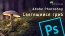 Уроки по Photoshop Светящийся гриб