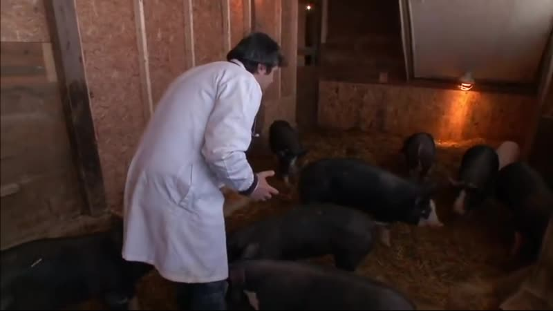 Можно ли перестать есть свинину?