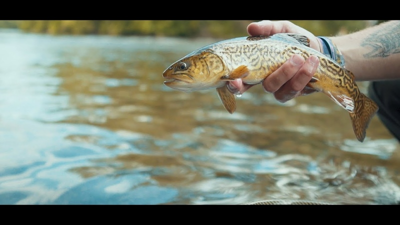 Fly Fishing The Musky - Cinematic Fly Fishing Adventure
