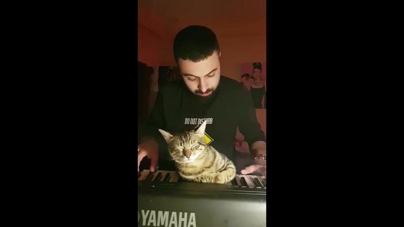 How to get a cat to sleep (Kedi nasıl uyutulur) 😊🐈