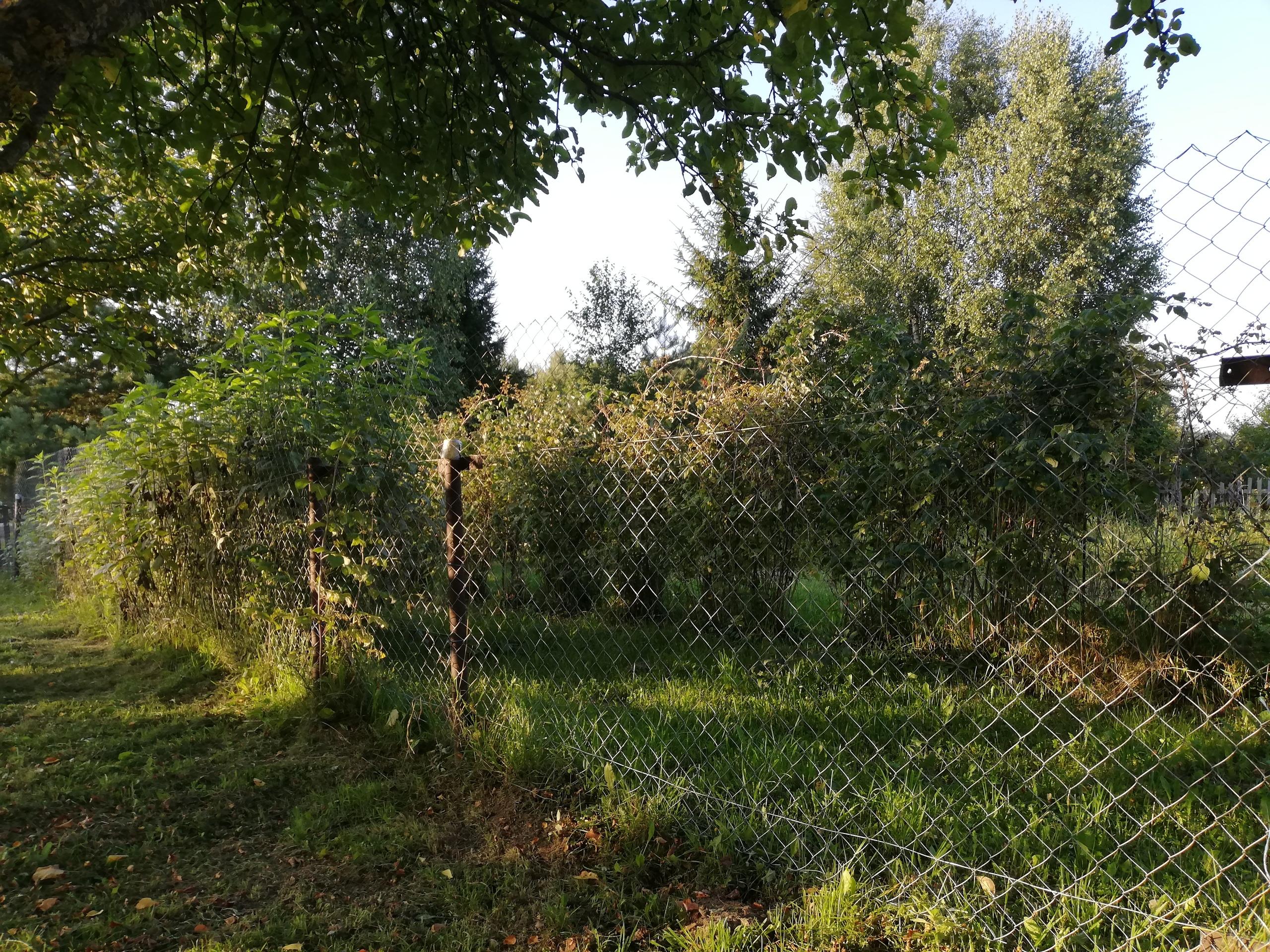 Летний рецепт огурчиков в начале осени