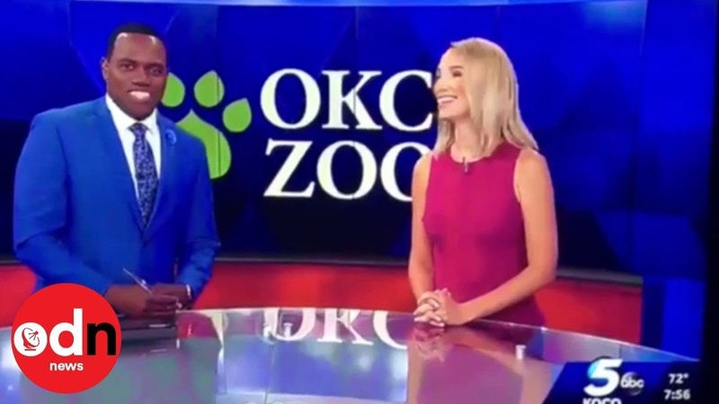 Anchor Apologises to Co-Host for Comparing Him to a Gorilla on Live TV