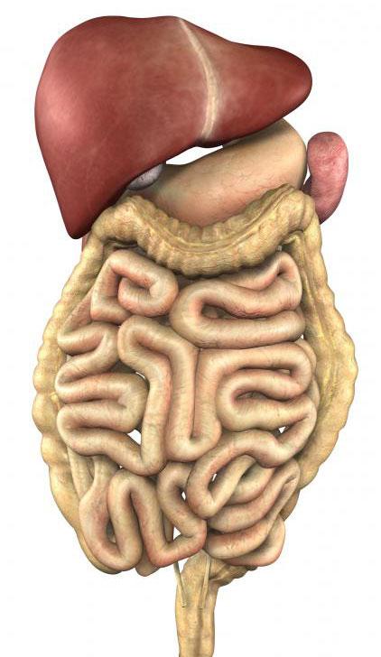 У людей может быть рак печени и легких одновременно, но между ними нет тесной связи.