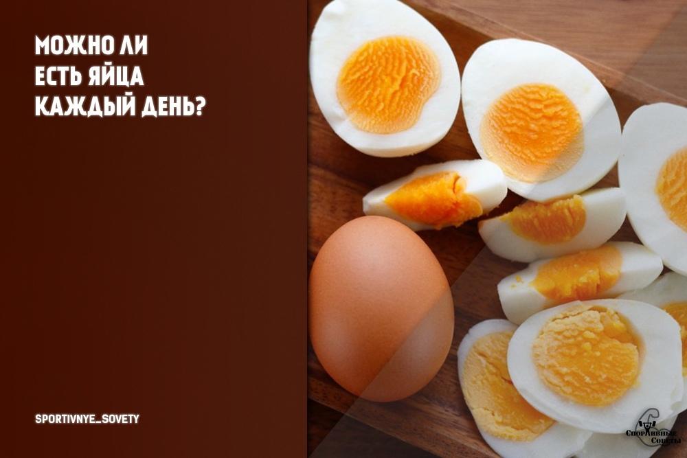 Можно ли есть яйца каждый день?