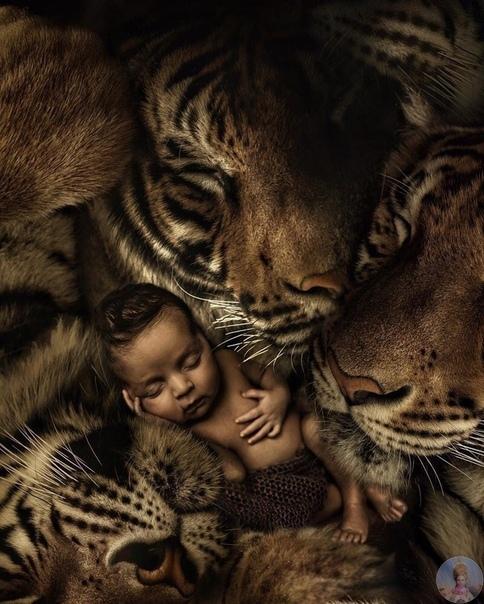 Фотограф из Нидерландов создаёт удивительные коллажи, чтобы привлечь внимание к проблемам защиты животных и дикой