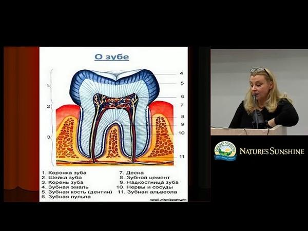Здоровье полости рта и зубов Чешко Ружена врач стоматолог высшей категории