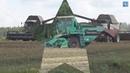 Курочка по зёрнышку клюёт Уборка урожая на Брянщине лето 2019