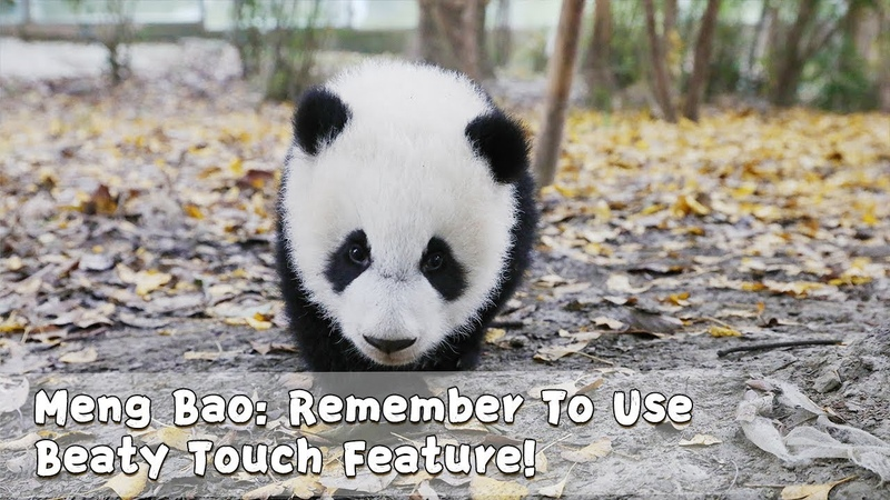 Meng Bao: Remember To Use Beaty Touch Feature! | iPanda