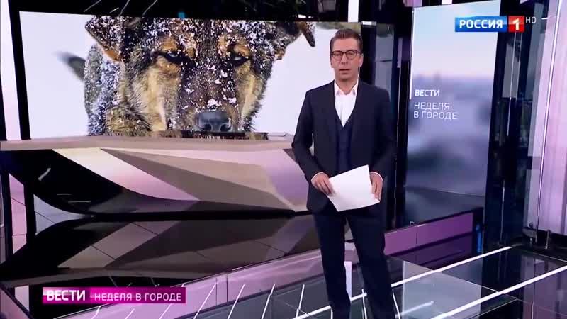 Жителей Подмосковья атакуют стаи бездомных собак Россия 24 1