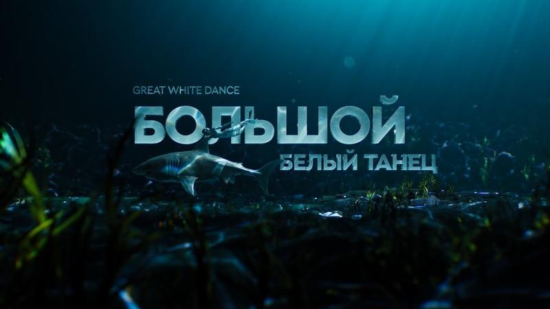 Большой белый танец | документальный фильм про акул 12