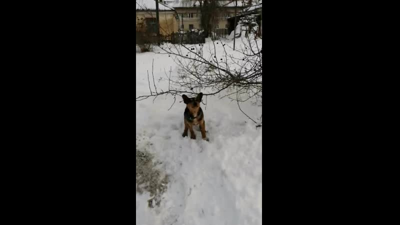 Video_20191211041324213_by_VideoMaker.mp4