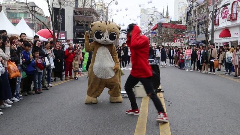 JHKTV 명물고양이댄스와디오비 special cat k pop dance dob 양성렬 yang sung yeol boombayah 붐바야