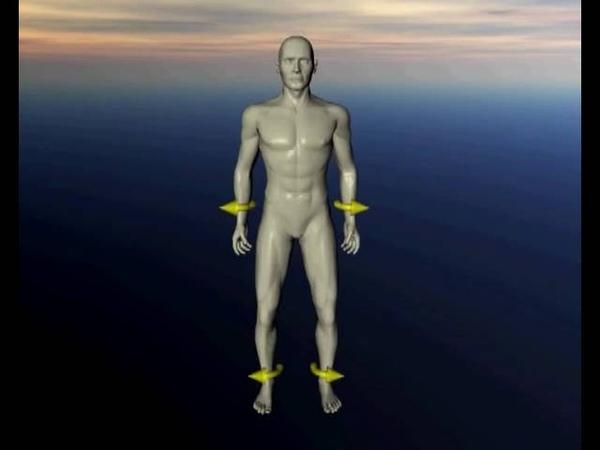 Краниосакральный ритм Флексия и экстензия в теле человека