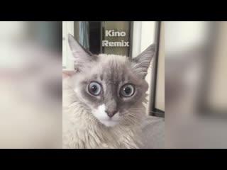 по доброму фото на паспорт kino remix 2019 ржач смешные коты приколы