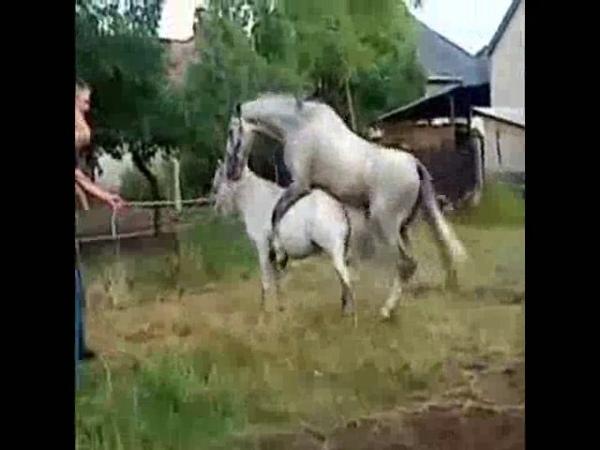 Лошади трахаются под стих Пушкина