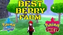Pokemon Sword And Shield Berry Farm