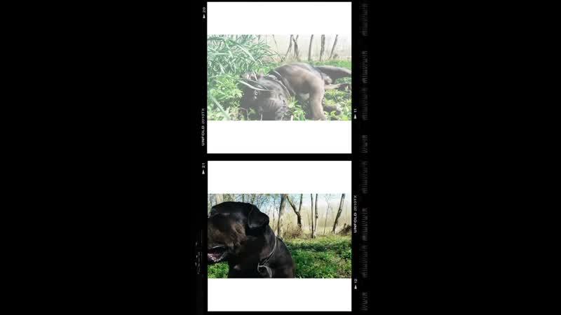 Фото відео нарізки