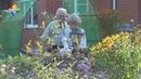 Чудесный сад семьи Золотаревых