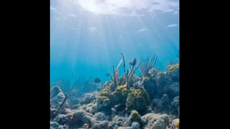 Я хочу на мальдивы, я хочу в маями, небо цвета RАЯ...бора-бора, сейшелы, карибы, фиджи, багамы, голубые гавайи...и конечно дубаи
