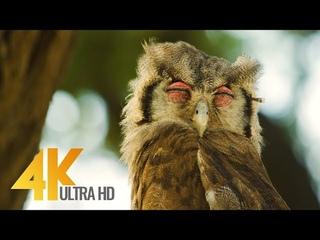 4K African Wildlife - Kgalagadi Transfrontier Park - Part #2 - 7 HRS Relax Video + Savannah Sounds