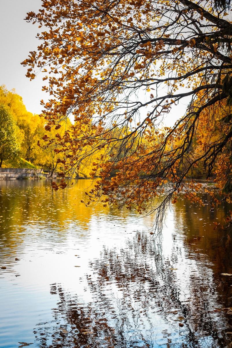 Moments of autumn  / Vlasikha 2019. ______________________________ Нереальная