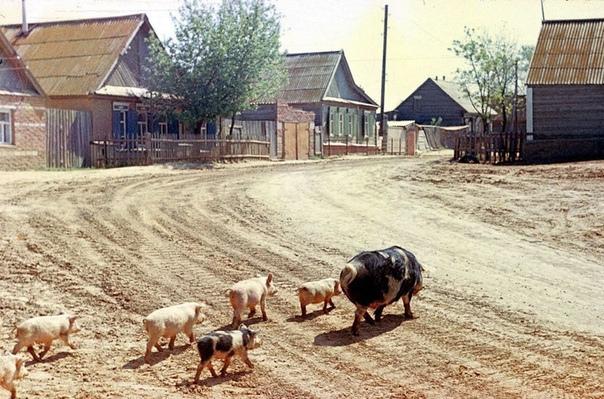 Сценка из жизни города Астрахань, 1989 год.