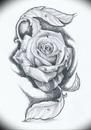drawings of roses - 607×866