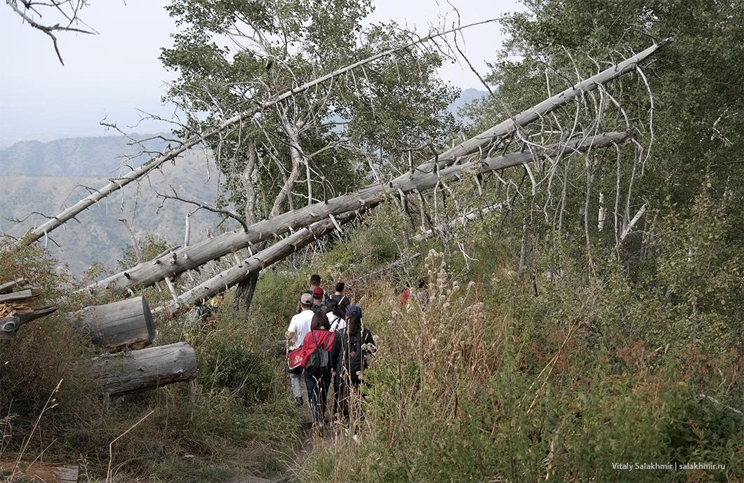 Поваленные деревья по дороге на Кок-Жайляу 2019